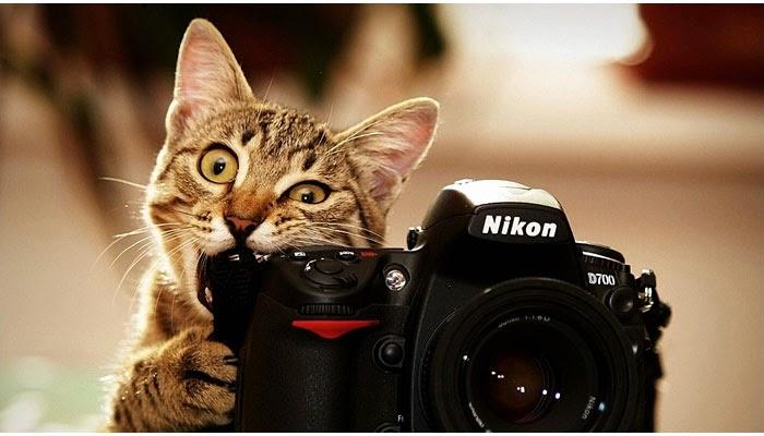 nikon kucing kamera