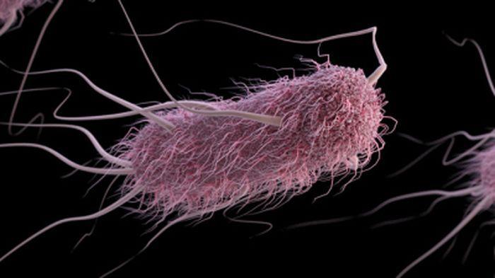 Bakteri E colli penyebab umum infeksi kandung kemih