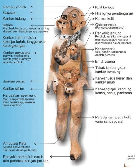tubuh perokok
