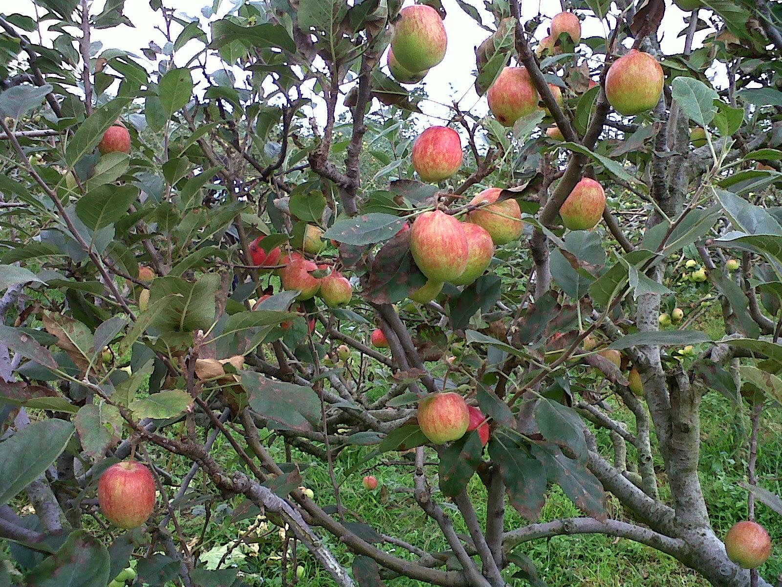 galena wisata petik apel