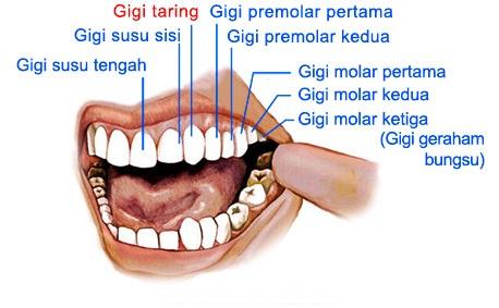 gigi taring 1