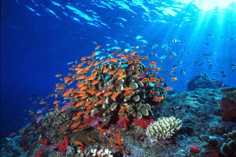 rantai makanan ekosistem laut