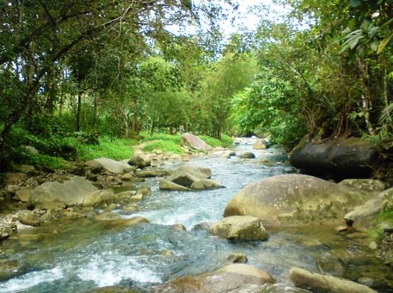 rantai makanan ekosistem sungai