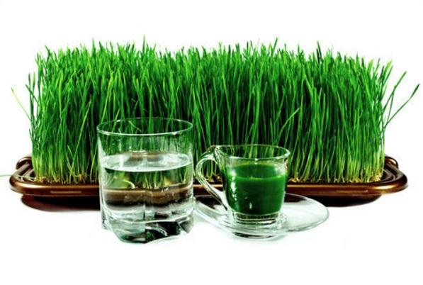 rumput untuk kesehatan